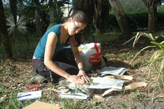 Angela Cano collecting Trithrinax at MBC