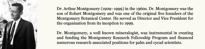 Dr. Arthur Montgomery (1909–1999) in the 1960s. Dr. Montgomery was the son of Robert Montgomery and was one of the original five founders of the Montgomery Botanical Center. He served as Director and Vice President for the organization from its inception to 1999. Dr. Montgomery, a well known mineralogist, was instrumental in creating and funding the Montgomery Research Fellowship Program and financed numerous research-associated positions for palm and cycad scientists.