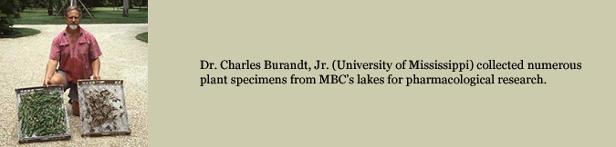 Dr. Charles Burandt, Jr. (University of Mississippi) collected numerous plant specimens from MBC's lakes for pharmacological research.