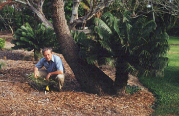 Photo of Dr. Dennis Stevenson with a cycad