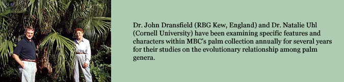 Dr. John Dransfield (RBG Kew, England) and Dr. Natalie Uhl (Cornell University) have been examining specific features and characters within MBC's palm collection annually for several years for their studies on the evolutionary relationship among palm genera.