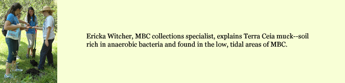Ericka Witcher, MBC collections specialist, explains Terra Ceia muck --soil rich in anaerobic bacteria and found in the low, tidal areas of MBC.