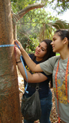 Mater Academy Charter School students measuring Gumbo Limbo tree at Montgomery Botanical Center for Environmental Immersion Day.