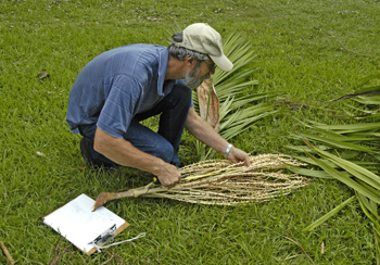 Photo of Dr. Larry Noblick inspecting the fruiting body of a palm