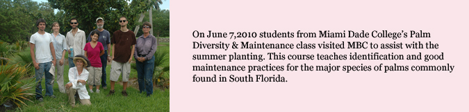 On June 7, 2010 students from Miami Dade College's Palm Diversity and Maintenance class visited MBC to assist with the summer planting.  This course teaches identification and good maintenance practices for the major species of palms commonly found in South Florida.