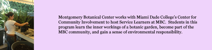Montgomery Botanical Center works with Miami Dade College's Center for Community Involvement to host Service Learners at MBC.  Students in this program learn the inner workings of a botanic garden, become part of the MBC community, and gain a sense of environmental responsibility.