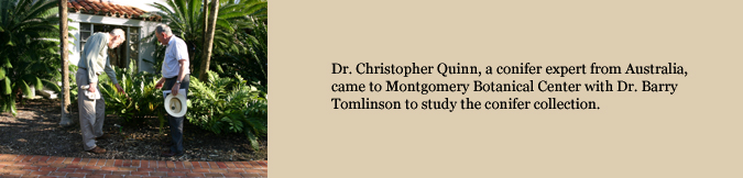 Dr. Christopher Quinn, a conifer expert from Australia, came to Montgomery Botanical Center with Dr. Barry Tomlinson to study the conifer collection.