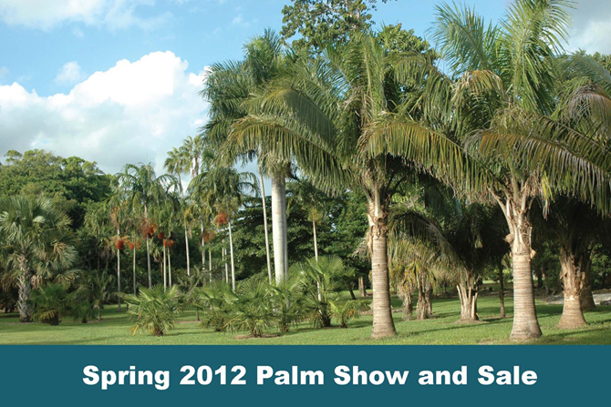 The World's Largest Sale of Palms and Cycads has over 25 vendors and thousands of rare and exotic plants for sale. Ribbons are awarded for several categories including