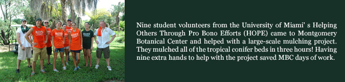 Nine student volunteers from the University of Miami' s Helping Others Through Pro Bono Efforts (HOPE) came to Montgomery Botanical Center and helped with a large-scale mulching project. They mulched all of the tropical conifer beds in three hours! Having  nine extra hands to help with the project saved MBC days of work. 2009.
