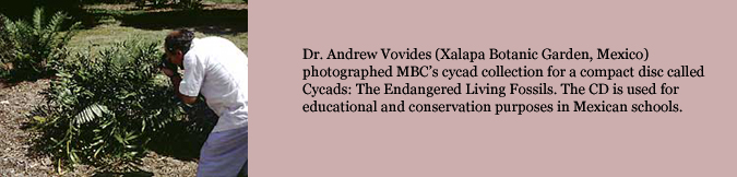 Dr. Andrew Vovides (Xalapa Botanic Garden, Mexico) photographed MBC's cycad collection for a compact disc called   Cycads: The Endangered Living Fossils. The CD is used for educational and conservation purposes in Mexican schools.