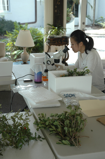 Zhang researching at Montgomery Botanical Center