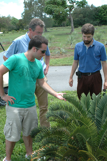 Photo of three men inspecting a cycad