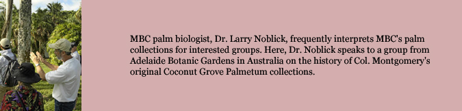 MBC palm biologist, Dr. Larry Noblick, frequently interprets MBC's palm collections for interested groups. Here, Dr. Noblick speaks to a group from Adelaide Botanic Gardens in Australia on the history of Col. Montgomery's original Coconut Grove Palmetum collections.