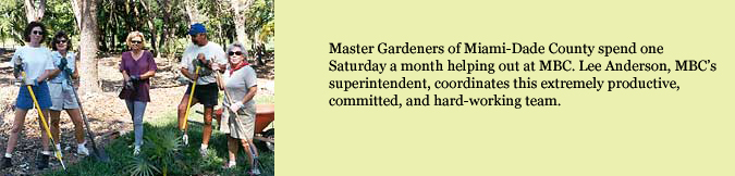 Master Gardeners of Miami-Dade County spend on Saturday a month helping out at MBC.  Lee Anderson, MBC's superintendent, coordinates this extremely productive, committed, and hard-working team.