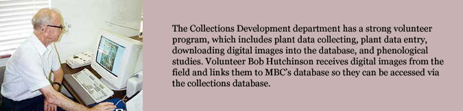 The Collections Development department has a strong volunteer program, which includes plant data collecting, plant data entry, downloading digital images into the database, and phenological studies. Volunteer Bob Hutchinson receives digital images from the field and links them to MBC's database so they can be accessed via the collections database.