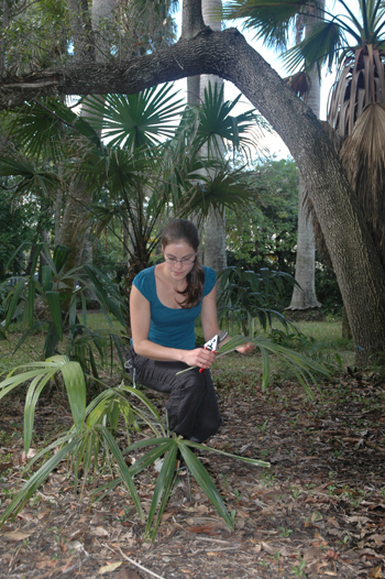 Photo of Angela Cano studying a young palm