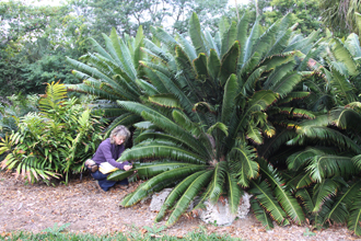 Boglarka Erdei at Montgomery Botanical Center with Dioon
