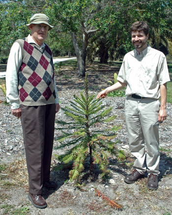 Photo of Dr. Chad Husby and Dr. John Popenoe with a conifer