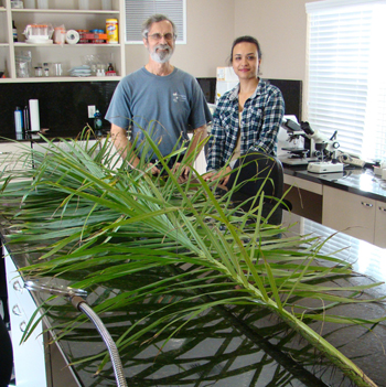 Photo of Dr. Larry Noblick and Suelen Alves Vianna in the lab with a Acrocromia frond