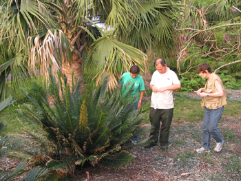 Photo of Dr. Irene Terry and William Tang inspecting a cycad