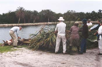 Photo of Dr. Barry Tomlinson inspecting a palm at the water's edge