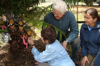 Photo of scientists inspecting cycad cones