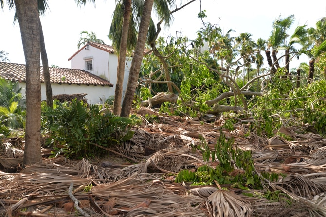 Photo of the fallen Ylang-Ylang in front of Nell's House