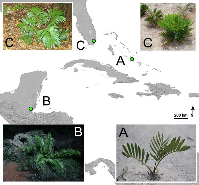 New study: botanic garden plants are not equal when it comes to conservation.