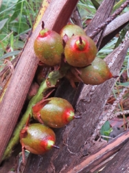 Montgomery Botanist Discovers Four New Palm Species