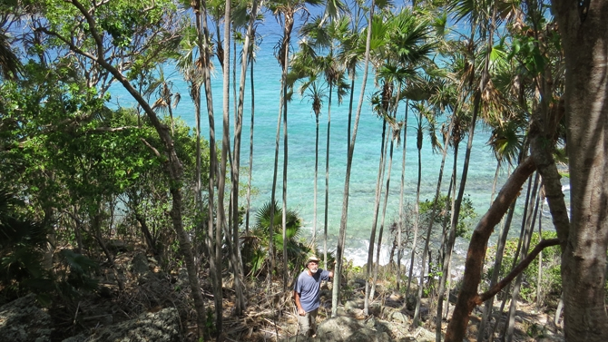 Collecting Palms in the US Virgin Islands